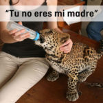 turismo-responsable-felinos-portada