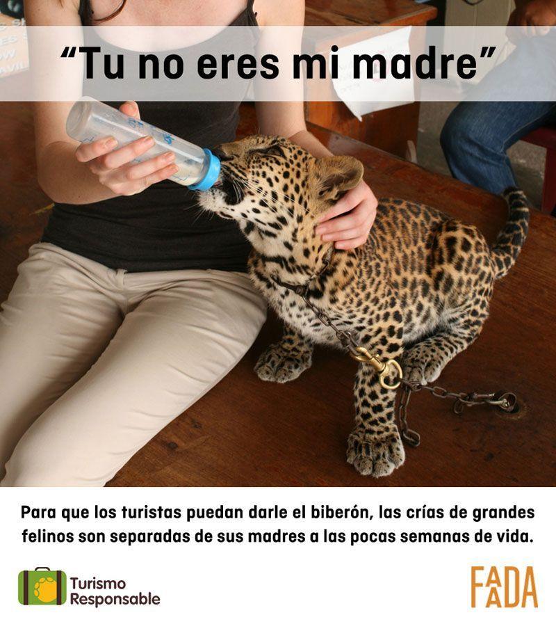 turismo-responsable-felinos