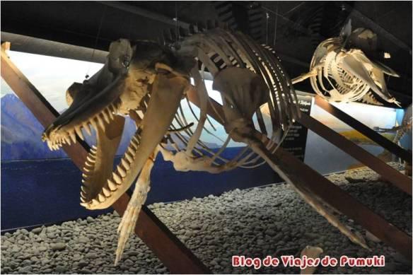 museos del mundo: ballenas en Husavik